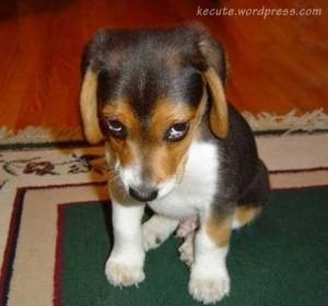 cute-dog-300x280